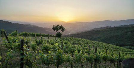 Vinica Agricolavinica